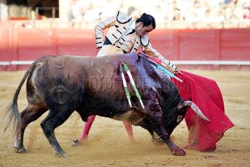 Sevilla  Spanien  ein Matador in Aktion mit einem Stier in der Real Maestranza