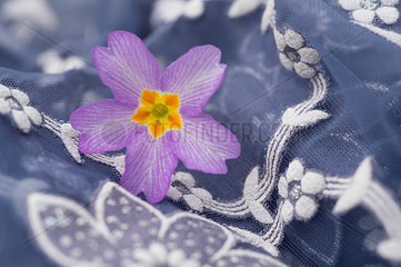 Blossom of primrose on floral patterned cloth  close-up