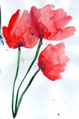 Mohnblumen 3 Blumen Blueten