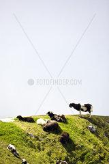 Gefleckte Schafe