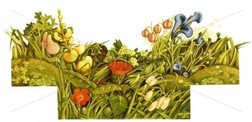 Kraeuter Wiesenblumen Wildblumen