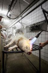 Schwein in Flammen 1