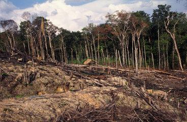 Brandrodungslandschaft im brasilianischen Urwald