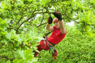 Kiel  Deutschland  Baumpflege im Sommer