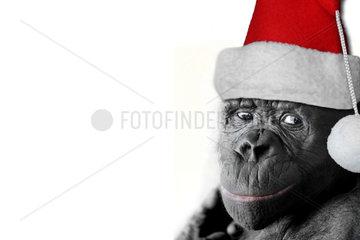Weihnachtsbonobo