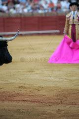 Sevilla  Spanien  ein Matador wartet mit dem Tuch auf den Stier in der Real Maestranza