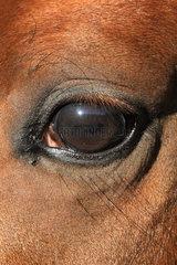 Berlin  Deutschland  Auge eines Pferdes