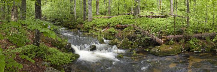 Bach im Nationalpark Bayerischer Wald  Creek in Bavarian forest national park
