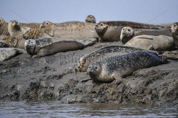 CHINA-LIAONING-PANJIN-SPOTTED SEALS (CN)