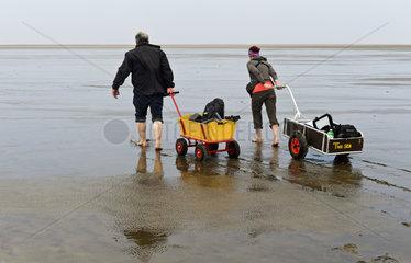 Wanderer im Watt ziehen Bollerwagen mit Strandgepaeck ueber die Wattflaeche Wattenmeer  Westerhever