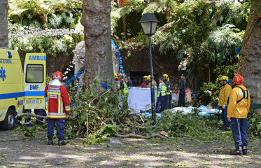 PORTUGAL-MADEIRA-TREE-COLLAPSE