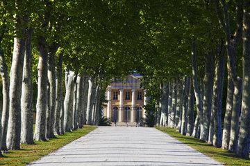 Platanenallee zum Chateau Margaux  Medoc  France