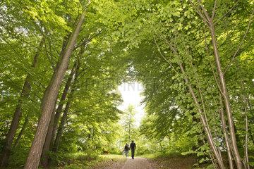 Wald  Bayern