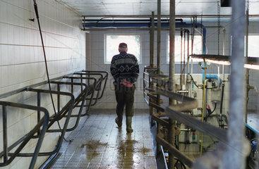 Heidenau  aelterer Bauer spaziert durch die Melkanlage