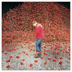 Poppy sculpture  Imperial War Museum  Manchester