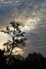 Berlin  Deutschland  Cirrocumuluswolken bei Daemmerung am Morgen