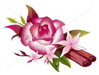 Rose Zimt Jasmin Duft Blumen Blueten Gewuerz