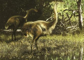 Dinornis maximus flightless birds from the Pleistocene epoch.