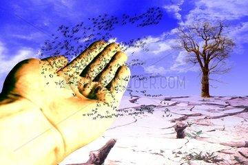 HAND BUCHSTABEN BAUM Duerre Natur Informationen
