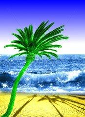 Urlaubstraum Palme Strand Meer Wellen Menschenleer