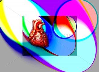 Herz Medizin Glaesern Transparente Mittelpunkt