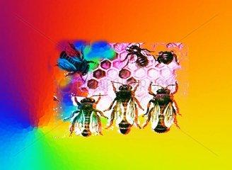 Bienenstaat Bienen Waben