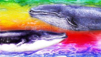 Koerpersprache Wale Aussterbende Tierarten Meeressaeuger Tiere