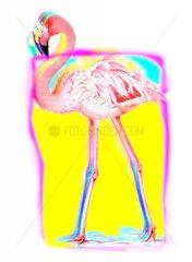 Flamingo Tier Vogelart Bunt Kuenstlerisch