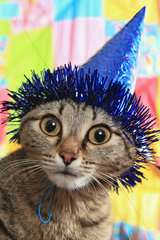 Ridiculous cat in a celebratory cap. A panic and bewilderment
