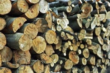 Holzstapel im Bieszczady Gebirge  Polen