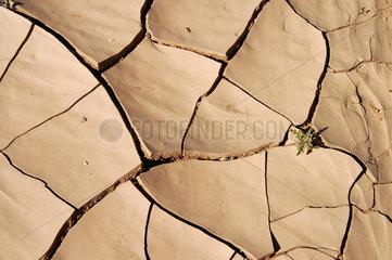 Ausgetrockneter Boden  Sahara  Libyen