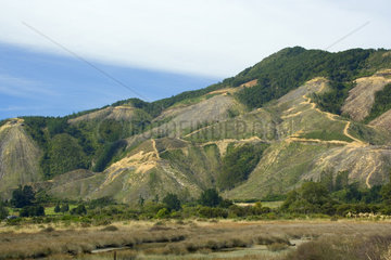 Abholzung  radikales Abholzen am malerischen Kenepuru Sound  Marlborough Sounds  Suedinsel  Neuseeland<br>Deforestation  radical felling of trees on picturesque Kenepuru Sound  Marlborough Sounds  South Island  New Zealand