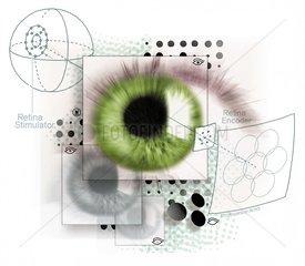 Auge Retina Augenuntersuchung