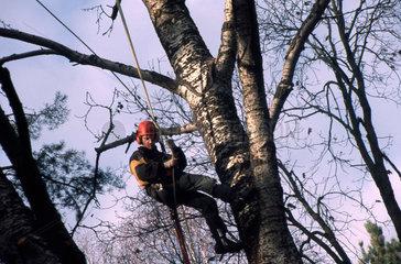 Der Baumpfleger