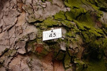 Baumnummer 45