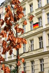 Trockene Eichenbaum vor eine Haus mit eine Deutsche Fahne