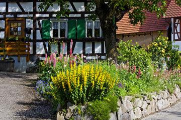 Fachwerkhaus mit bluehendem Vorgarten
