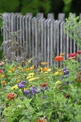 Gartenzaun mit bunten Blumen im Vordergrund