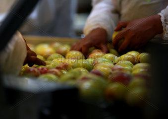 CHILE-MOSTAZAL-FRUIT PRODUCER-CHINA-EXPORT