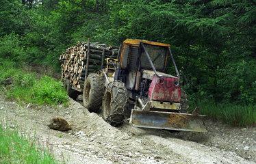 Holz wird mit einem Radlader transportiert  Polen