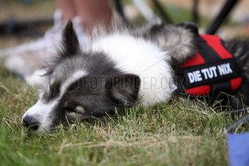 Bad Doberan  Deutschland  Hund schlaeft auf einer Wiese