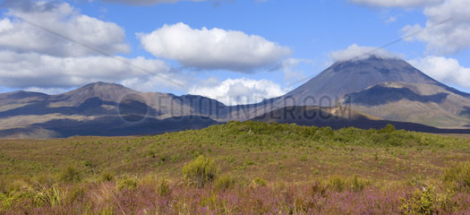 Tongariro Nationalpark  die beiden Vulkane Mount Tongariro und Mount Ngauruhoe erheben sich aus einer mit bluehendem Heidekraut uebersaeten Ebene  Tongariro Nationalpark  Nordinsel  Neuseeland  Tongariro National Park  volcanoes Mount Tongariro on the lef