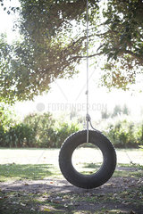 Tire swing hanging from tree branch