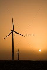 Spanien  Jacobs Windpark im Sueden des Landes bei Sonnenaufgang