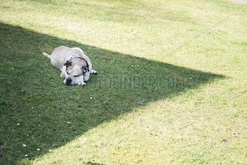 Hund im Schatten