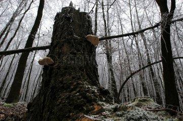 Nationalpark Kellerwald