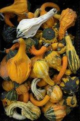 Kuerbisse im Herbst