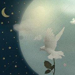 Weisse Taube Frieden