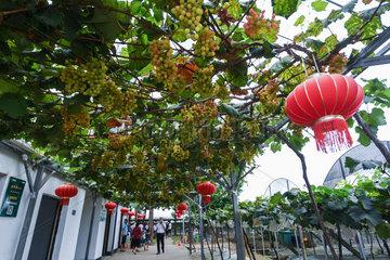 CHINA-ZHEJIANG-HANGZHOU-RURAL TOURISM (CN)