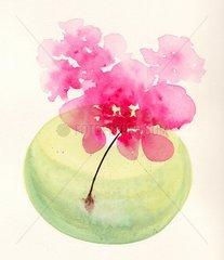 Blume Bluete Rosa Vase
